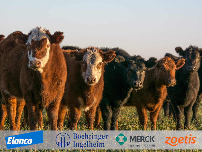 Cattle: Animal Healthcare Supplies